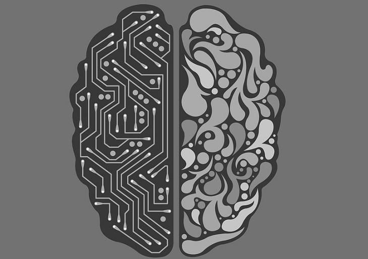 השפעתן של תלונות על המוח: איור של מוח עם צד חיווטים בצידו השמאלי