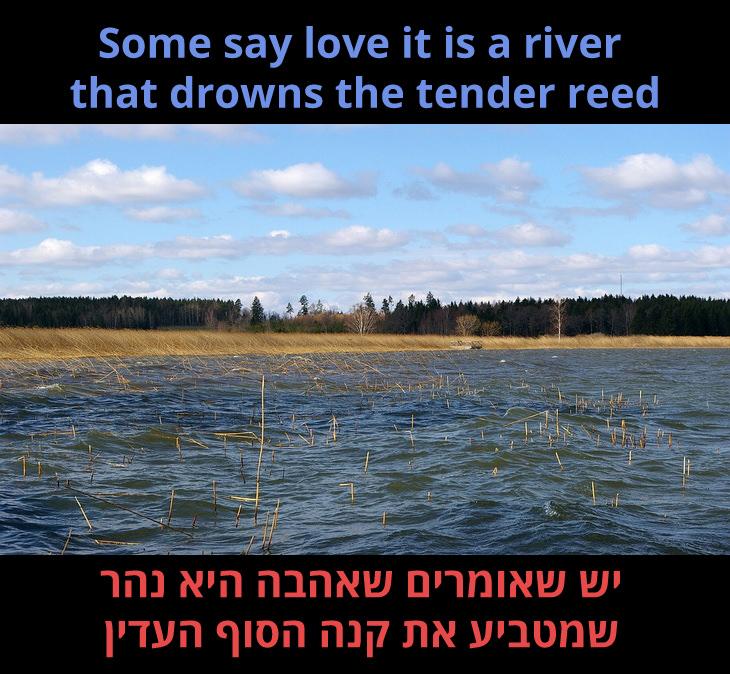 """מצגת לשיר """"הוורד"""" של בט מידלר: יש שאומרים שאהבה היא נהר שמטביע את קנה הסוף העדין"""