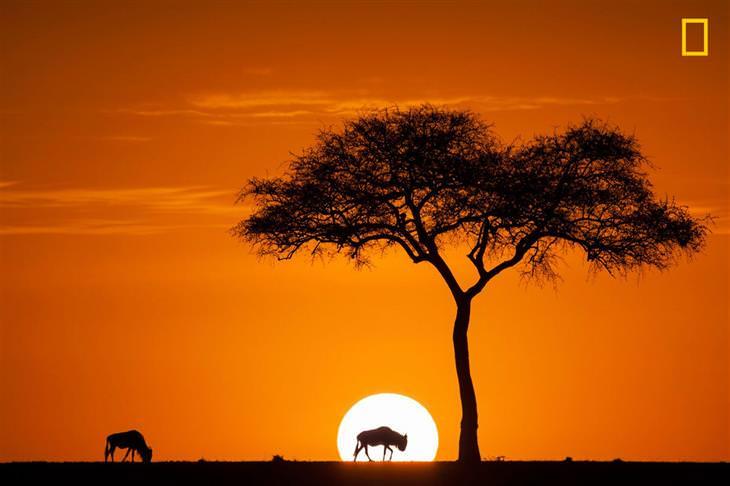 תמונות טבע מתחרות הצילום של נשיונל ג'יאוגרפיק 2017: בעל חיים עומד מול השמש הזורחת שבאופק