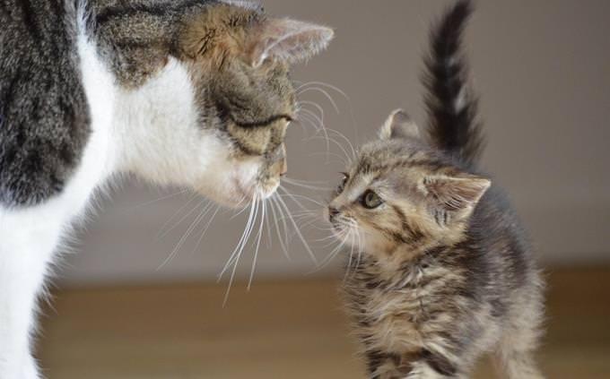מבחן טריוויה ביטויים ופתגמים: חתול ניצב מול גור חתולים