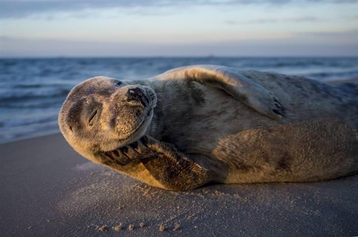 תחרות תמונות טבע נשיונל גיאוגרפיק 2017: כלב ים מחויך שוכב על החוף
