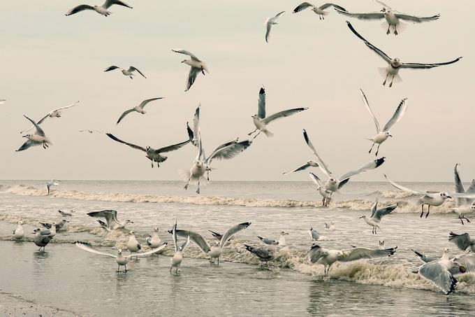 בחן את עצמך - נפש בריאה: קבוצת שחפים בחוף