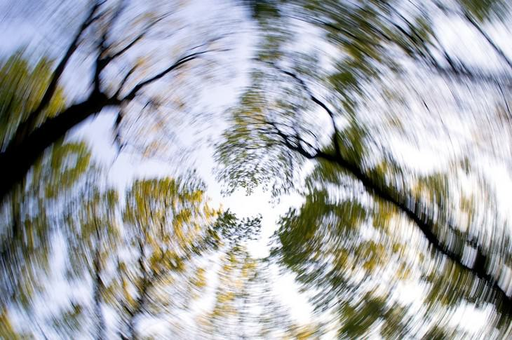 תסמינים של אלרגיות למזון: עצים מטושטשים
