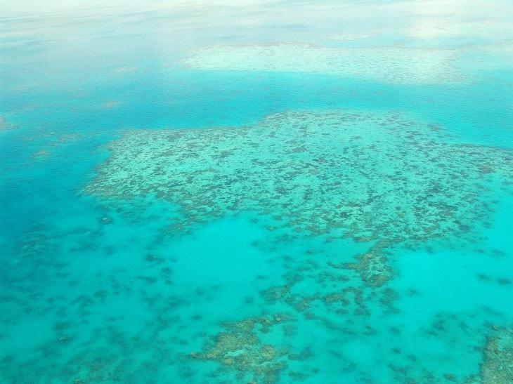 חדשות חיוביות מ-2017: שונית האלמוגים הגדולה
