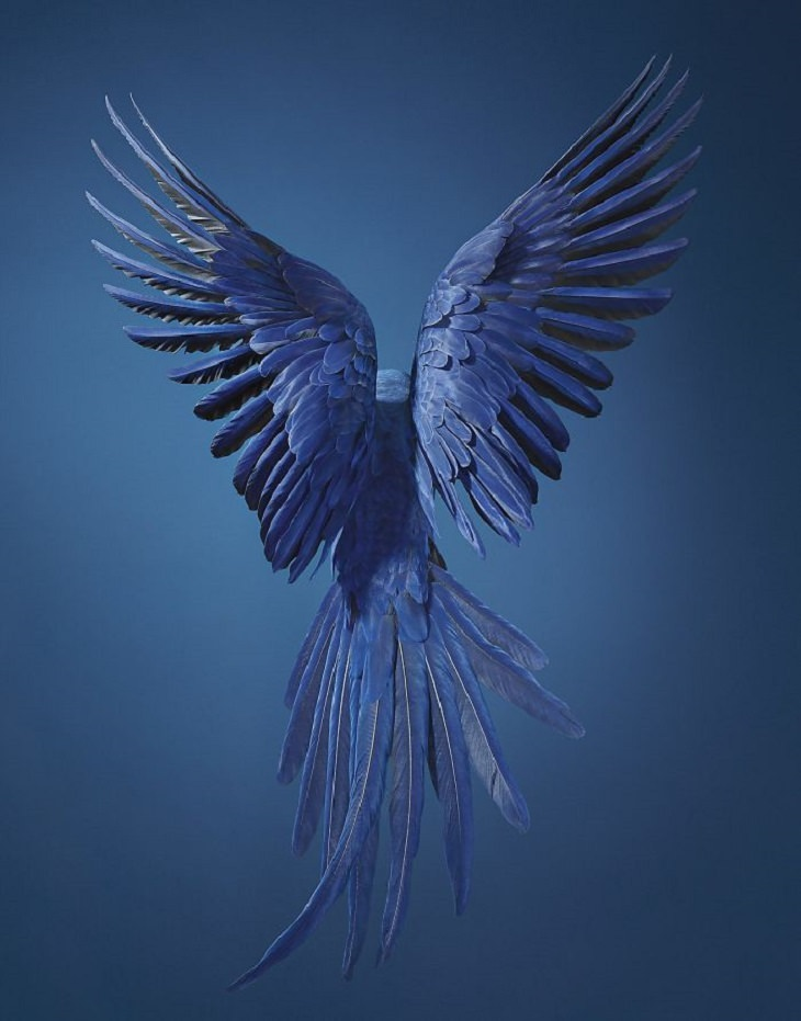 חיות בסכנת הכחדה: ארת ענק יקינתונית - Hyacinth Macaw