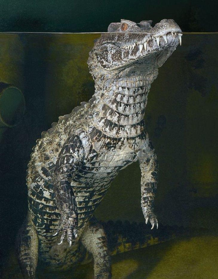 חיות בסכנת הכחדה: קמדן גמדי של שניידר - Smooth Fronted Caiman