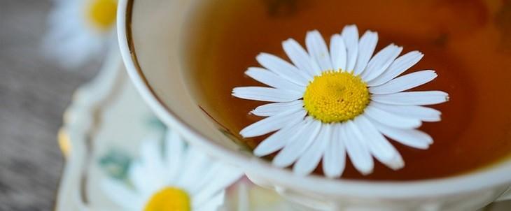 עשבי תיבול שמתאימים לחיות מחמד: תה קמומיל עם פרח בתוכו