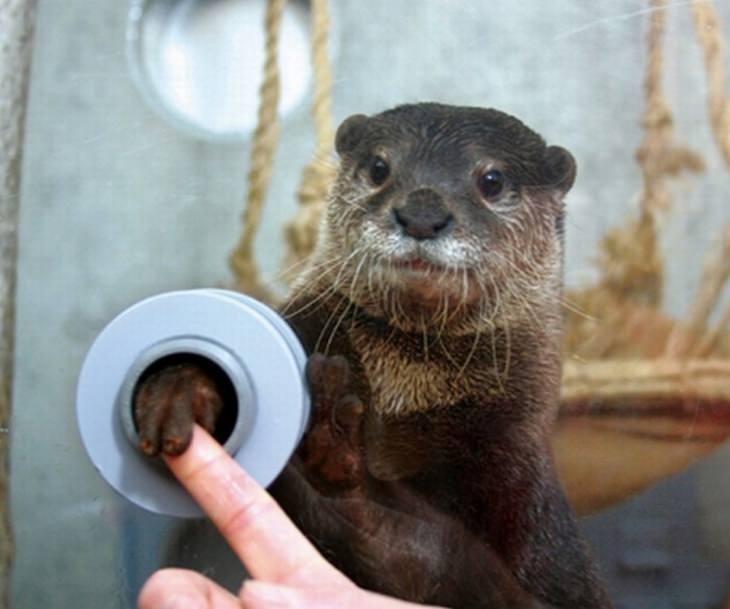 המצאות מיפן: חור ללחיצת יד ללוטרה בגן חיות