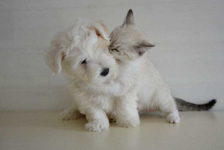 עשבי תיבול שמתאימים לחיות מחמד: חתול מחבק כלב