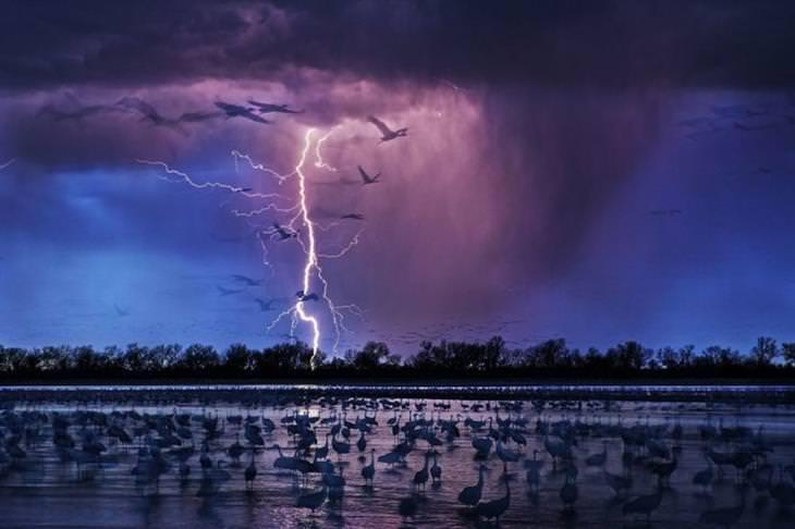 זוכי תחרות הצילום בסיינה: ברק פוגע באדמה מול אגם מלא בציפורים