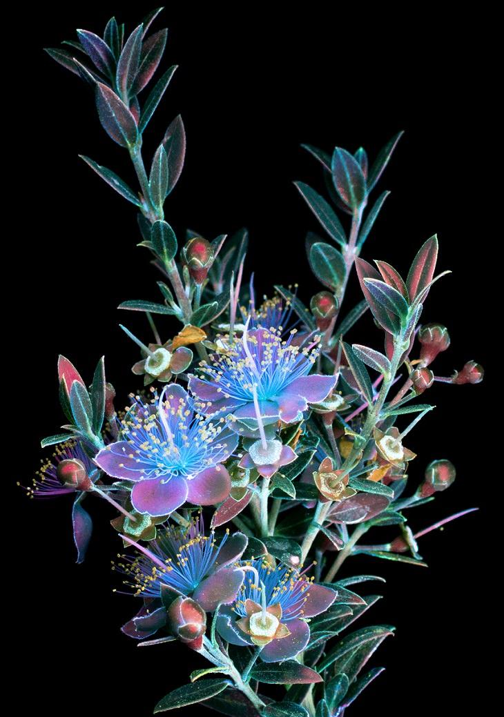צמח עם פרחים ועלים מואר בשלל צבעים סגול, צהוב, כתום, ירוק ועוד