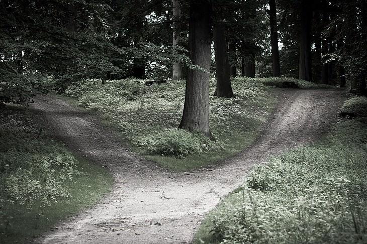 שבילים ביער