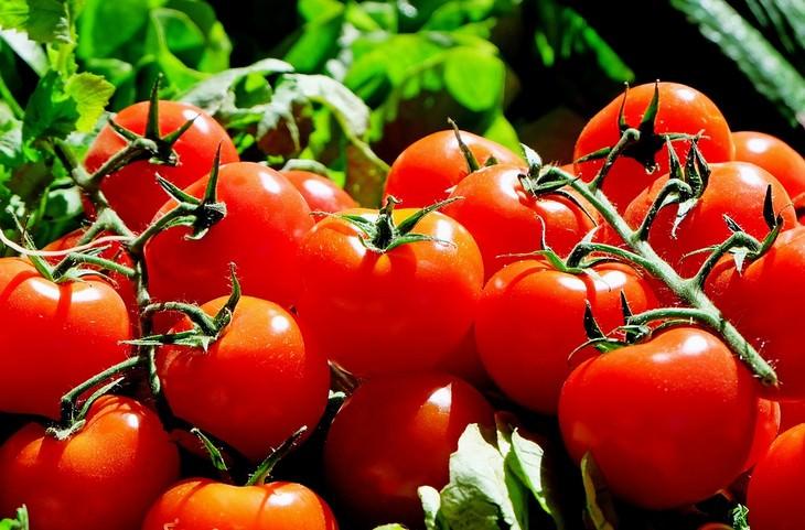 אשכול עגבניות