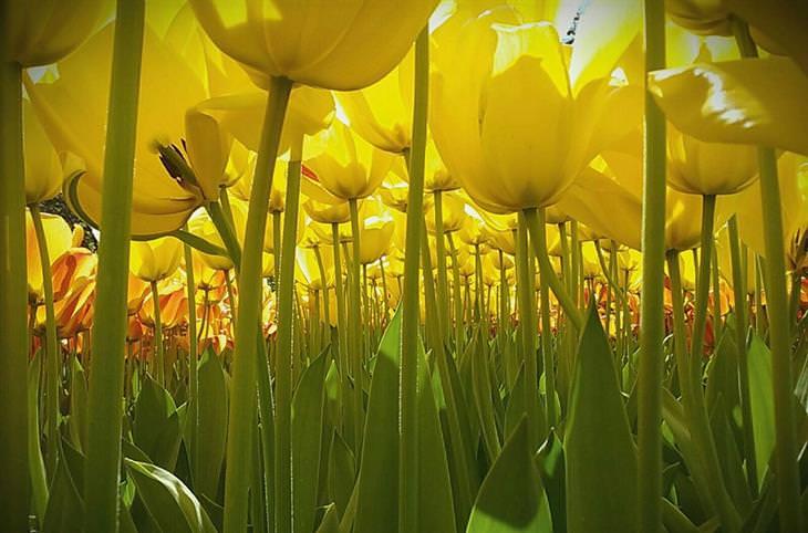 צבעונים צהובים מנקודת מבט של חרק