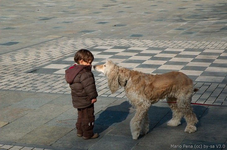 ילד וכלב גדול עומדים זה מול זה