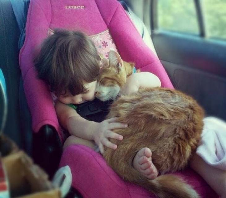 ילדה וחתול מחובקים בזמן נסיעה
