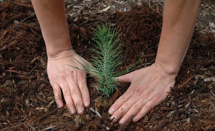 ידיים מכסות שורשי עץ קטן באדמה