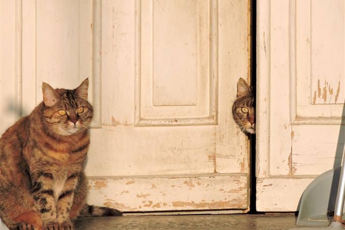 חתול יושב ליד דלת, ועוד אחד מציץ דרכה