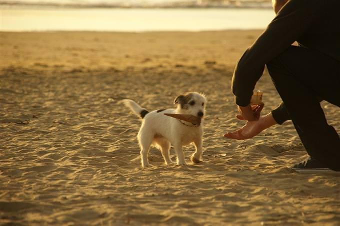 אדם מושיט יד לכלב שמחזיק חפץ בפה