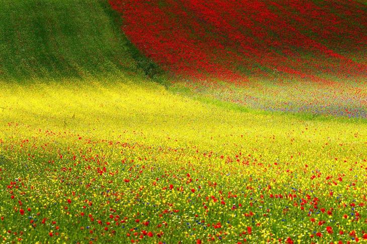 שדה פרחים צבעוני