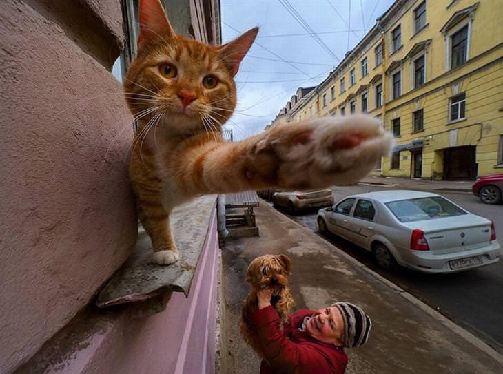 חתול שולח יד אל עבר המצלמה