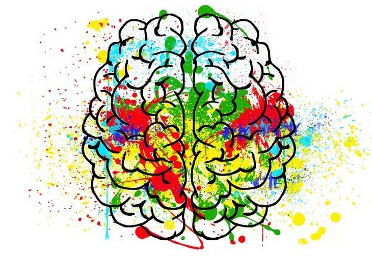עובדות על המוח: איור של מוח עם צבעים עליו