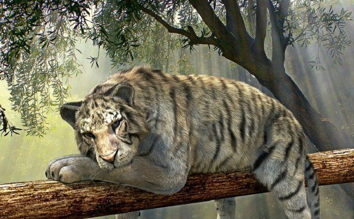 טיגריס שוכב על ענף עץ