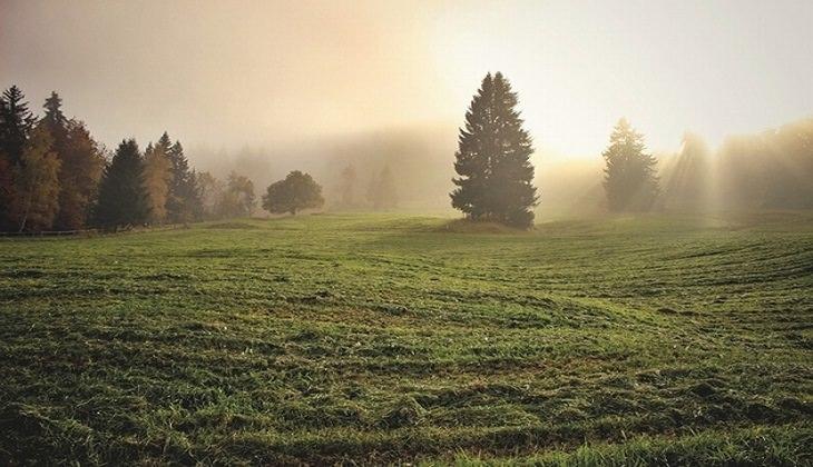 15 לקחים חשובים לחיים: עצים ומרבד דשא וצמחיה ביער, על רקע אור הזריחה המנצנץ