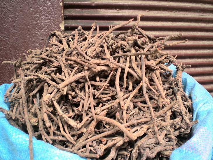 יתרונות בריאותיים של צמח הוולריאן: ערימה גדולה של שורש וולריאן