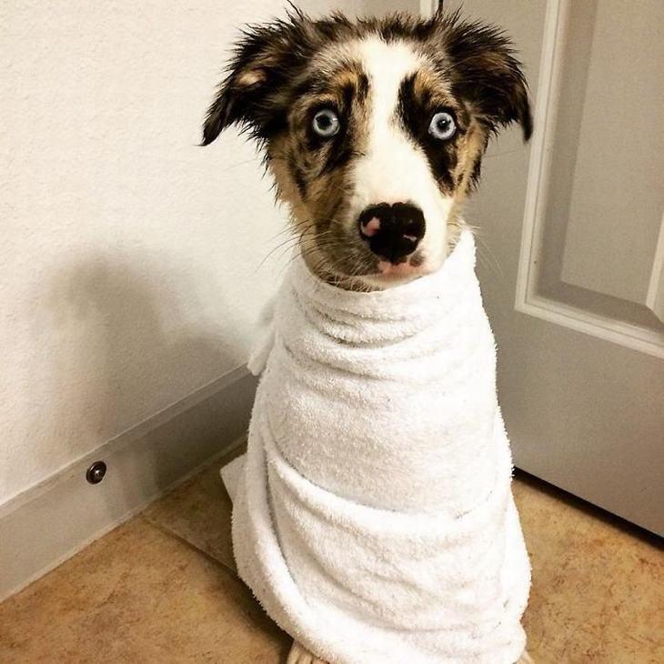 כלב עטוף במגבת עם מבט מופתע בפניו