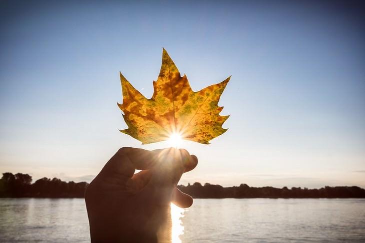 דרכים להגברת רמות הסרוטונין: יד מחזיקה עלה מול השמש