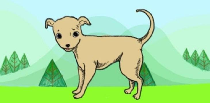כלב עם זנב המכוון מעלה