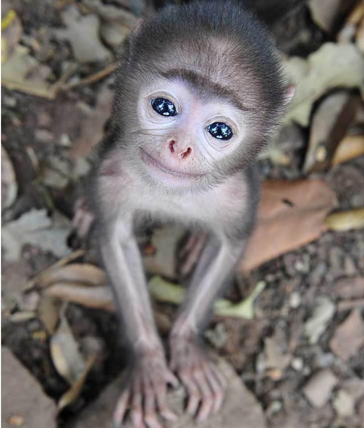 קוף מחייך למצלמה