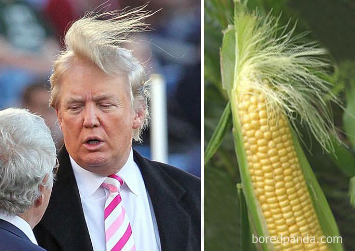 מי לבש את זה יותר טוב? תמונות מצחיקות