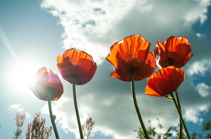 פרחים וצמחים לגידול בקיץ: פרחים גדלים תחת השמש