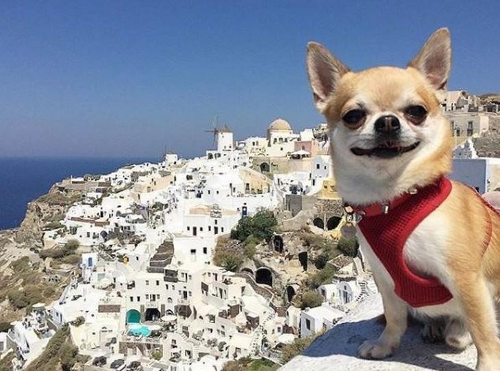 חיות מחמד מטיילות: כלב מחייך על רקע של מבנים מרוחקים