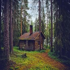 מה הבית שתבחרו מעיד על אופייכם: בית עץ ביער
