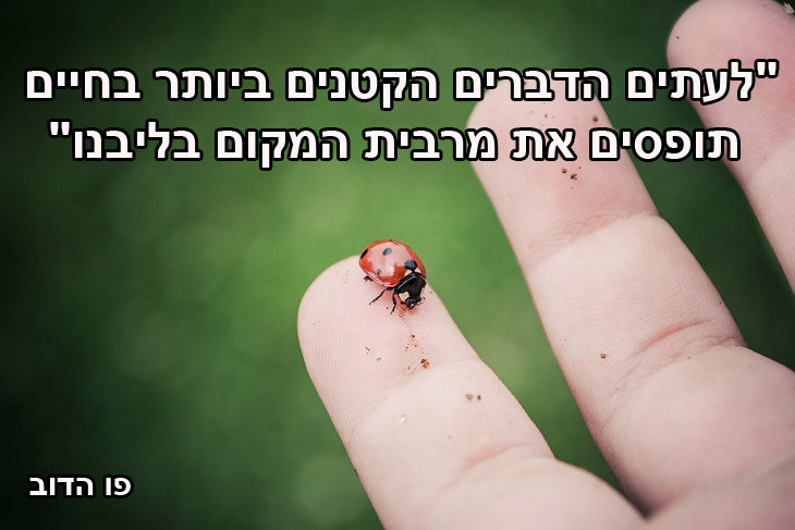 """ציטוטים על החיים: """"לעתים הדברים הקטנים ביותר בחיים תופסים את מרבית המקום בליבנו"""" פו הדוב"""