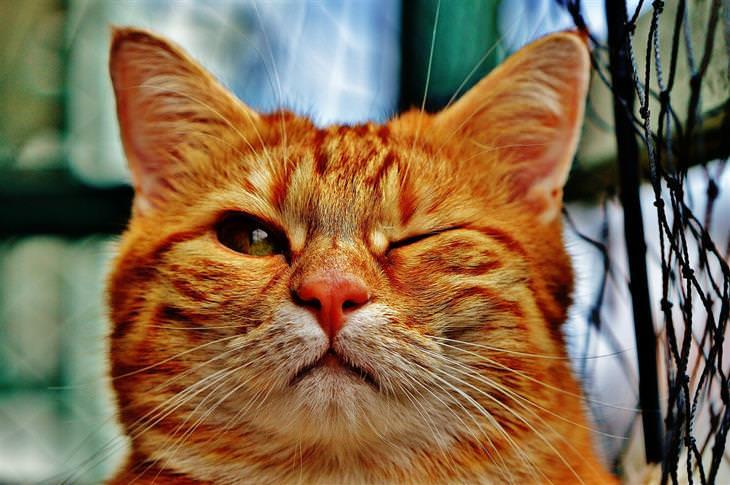 מחלות שחיות המחמד יכולות להעביר אלינו: חתול קורץ