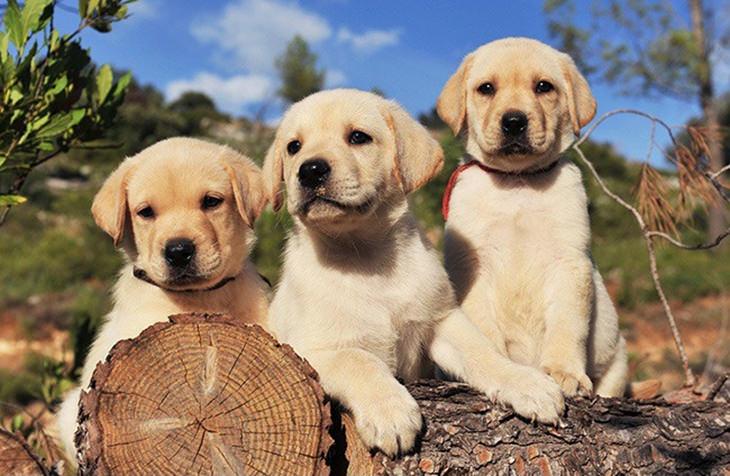 איך חיות רואות את העולם: כלבים יושבים על בול עץ