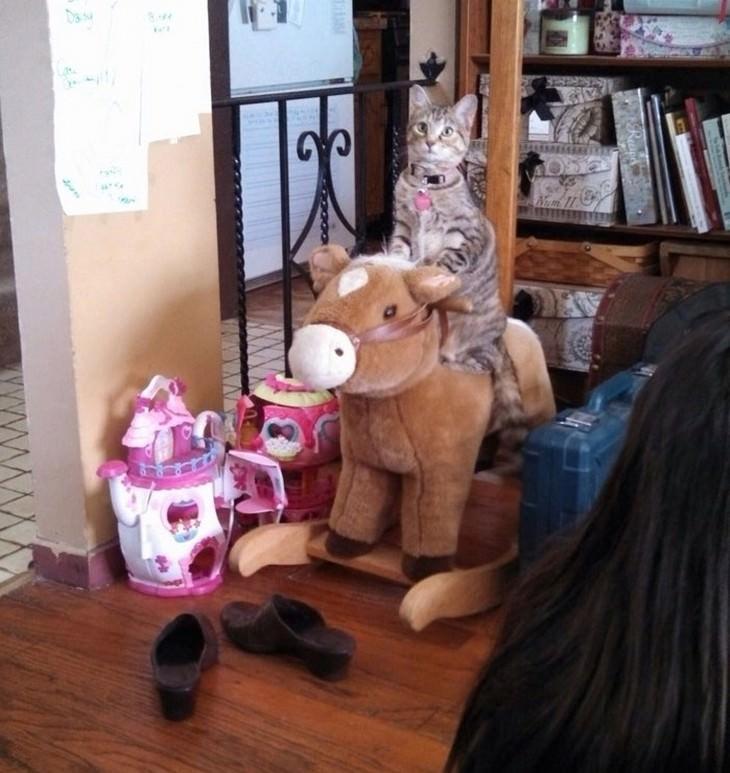 תמונות מצחיקות של חתולים: חתול יושב על סוס צעצוע