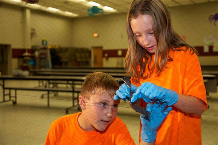 סגנונות למידה אצל ילדים: ילדים עוסקים במשימה לימודית חוויתית