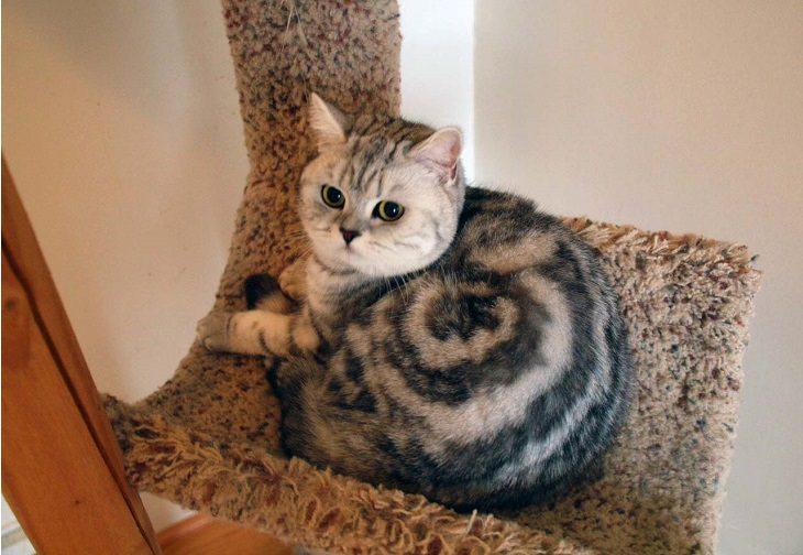חתולים עם צורות וסימנים מצחיקים על הפרווה