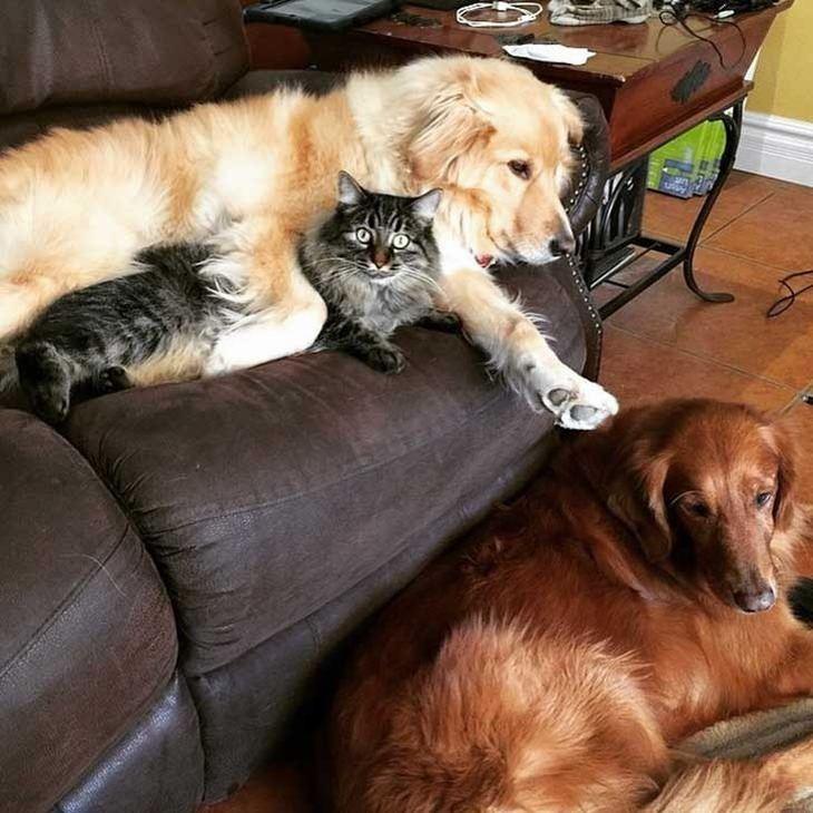 בתים עם חיות מחמד רבות