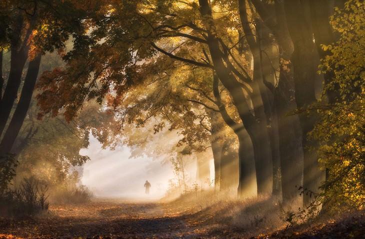 סתיו בפולין: שדרת עצים עם קרני שמש שחודרות דרכן
