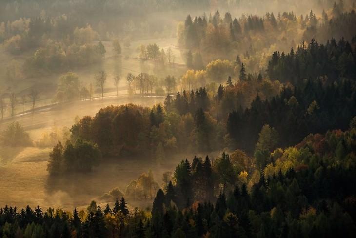 סתיו בפולין: יער אפוף בערפל
