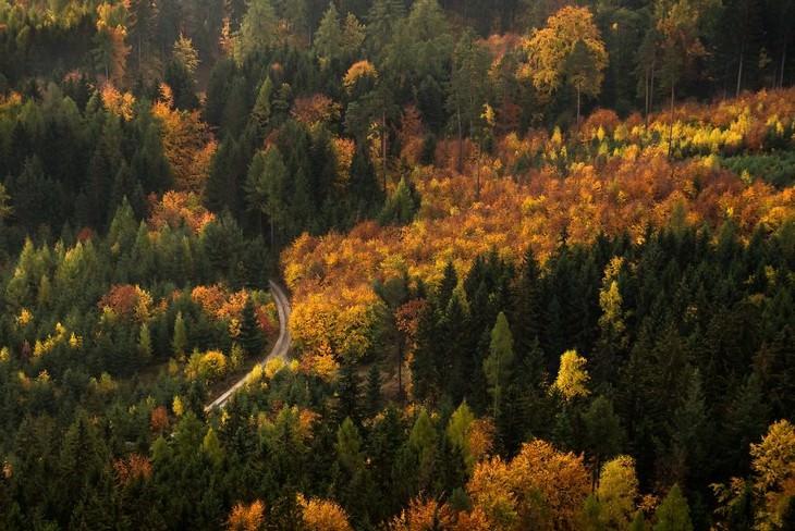סתיו בפולין: צילום של יער צבעוני מלמעלה