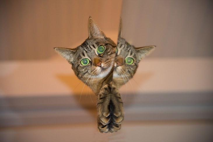 סוגי אישיות של חתולים: חתול מציץ מבעד למראה, ופניו משתקפות בה