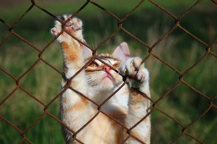 סוגי אישיות של חתולים: חתול מטפס על גדר מתכת
