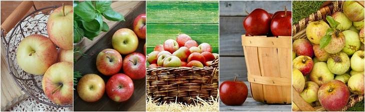 מדריך זנים של תפוחים: סוגים שונים של תפוחי עץ